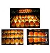 Máy soi trứng loại 6 hàng KS-10000